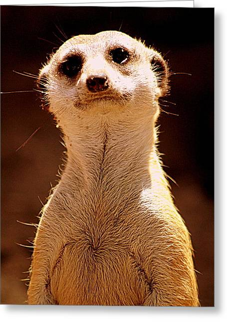 """animal Photographs"" Greeting Cards - Curious Meerkat Greeting Card by Tam Graff"