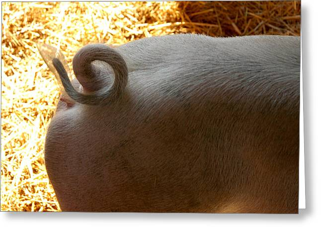 The Agricultural Life Greeting Cards - Curly Pigtail Greeting Card by LeeAnn McLaneGoetz McLaneGoetzStudioLLCcom