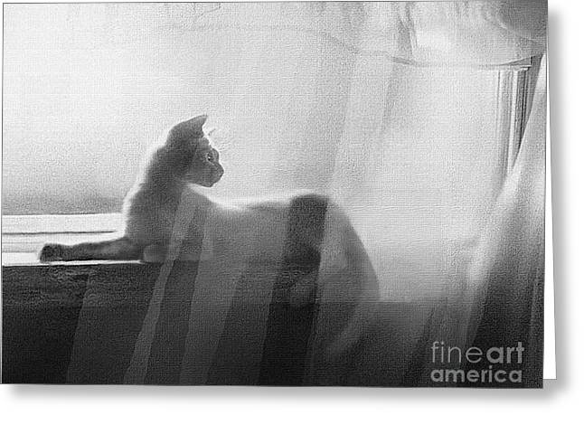 Siamese Cat Print Greeting Cards - Curtain Light Greeting Card by Robert Foster