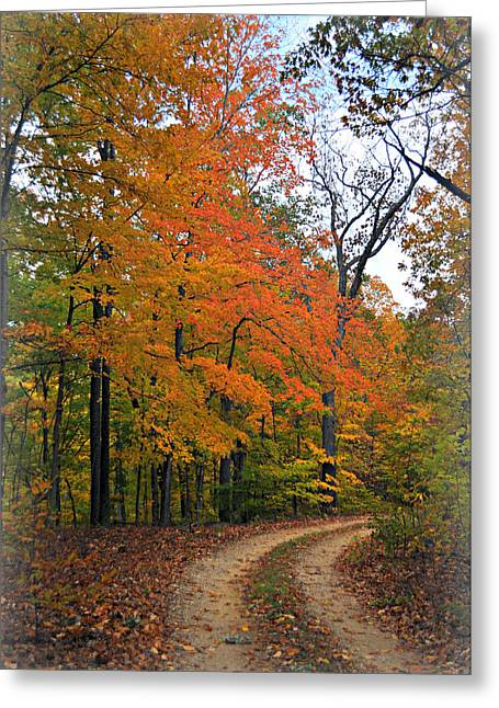 Marty Koch Greeting Cards - Curve In Fall Greeting Card by Marty Koch