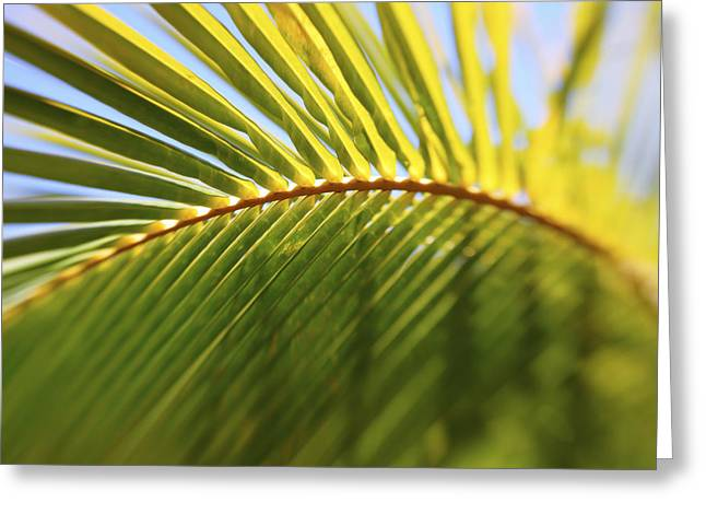 Vince Greeting Cards - Curved Palm Leaf Greeting Card by Vince Cavataio - Printscapes
