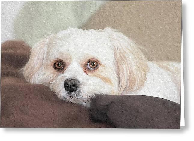 Custom Pet Drawing Greeting Cards - Custom Sample 002 Greeting Card by Mike Flake
