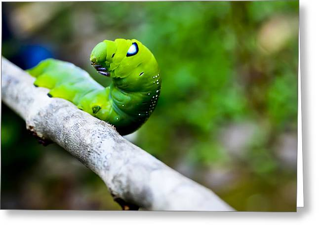 Best Sellers -  - Eating Entomology Greeting Cards - Cute Caterpiller Greeting Card by Meril Mathew
