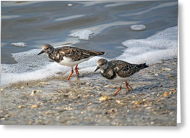 Sandpipers Greeting Cards - Cute Couple Greeting Card by Kenneth Albin