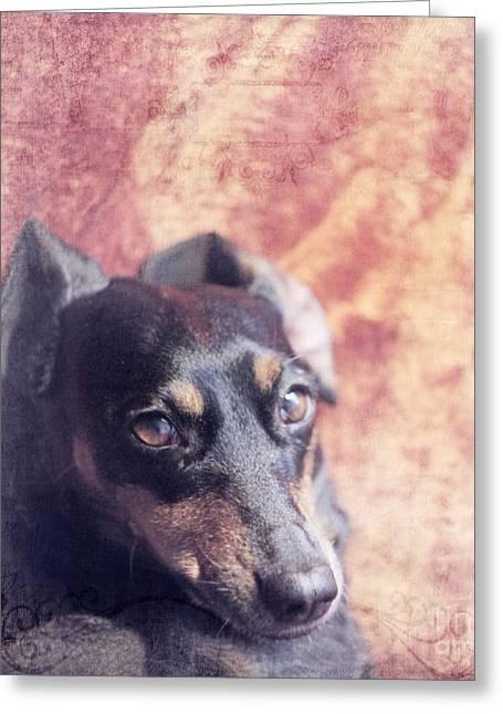 Lazy Dogs Greeting Cards - Cute Daschund Greeting Card by Angel  Tarantella