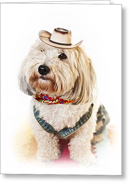 Overalls Greeting Cards - Cute dog in Halloween cowboy costume Greeting Card by Elena Elisseeva