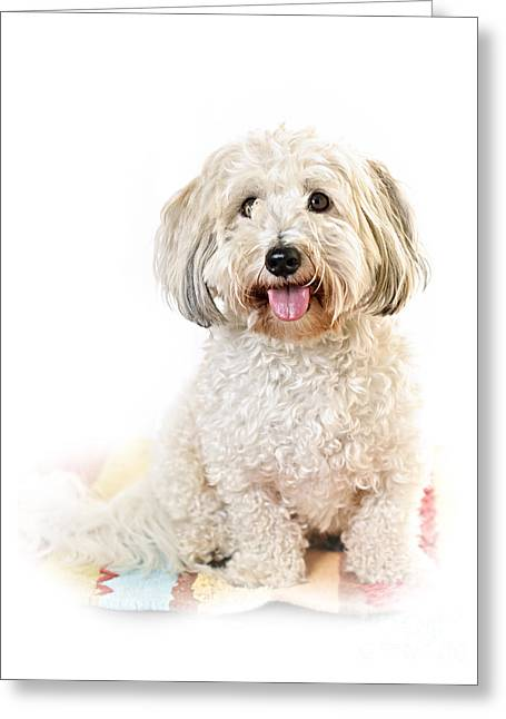 Mat Greeting Cards - Cute dog portrait Greeting Card by Elena Elisseeva