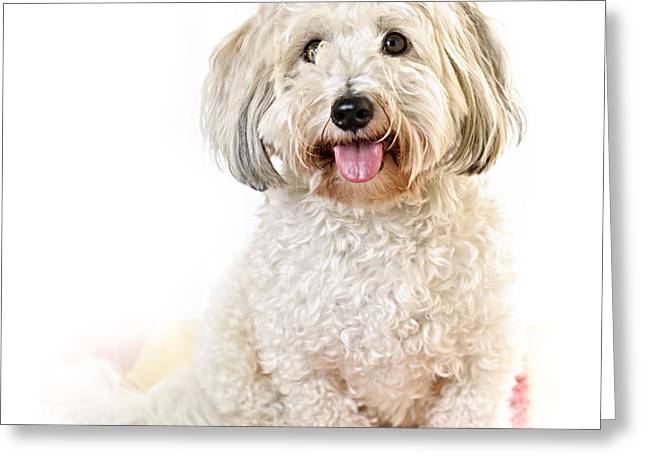 Cute dog portrait Greeting Card by Elena Elisseeva