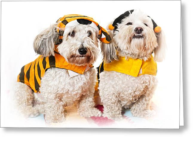 Dressed Up Greeting Cards - Cute dogs in Halloween costumes Greeting Card by Elena Elisseeva
