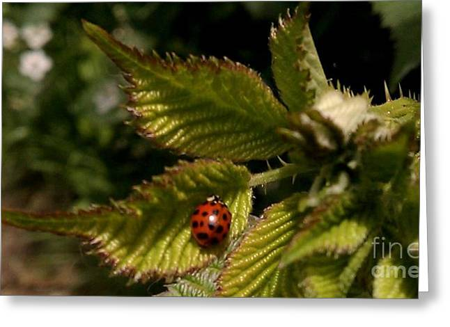 Cute Red Ladybug  Greeting Card by Garnett  Jaeger