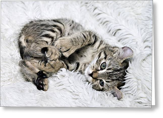 Susan Leggett Greeting Cards - Cute Tabby Kitten Greeting Card by Susan Leggett