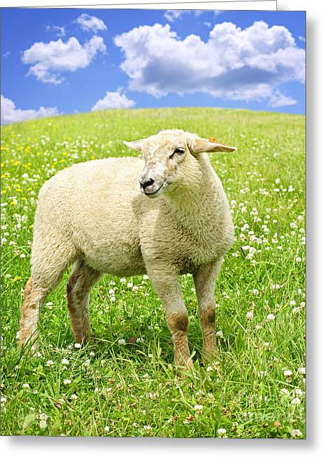 Wooly Greeting Cards - Cute young sheep Greeting Card by Elena Elisseeva
