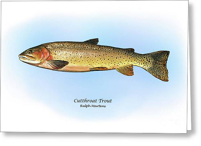 Sport Fishi Greeting Cards - Cutthroat Trout Greeting Card by Ralph Martens
