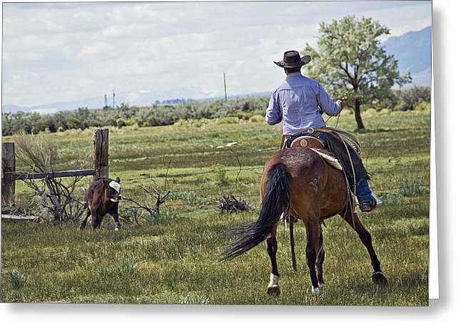 Cowboy Greeting Cards - Cuttin Back Greeting Card by Megan Chambers