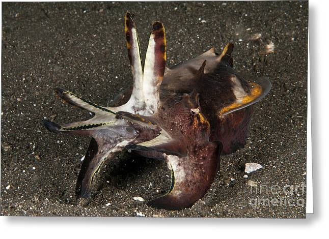 Cephalopod Greeting Cards - Cuttlefish With Tentacles Extended Greeting Card by Mathieu Meur