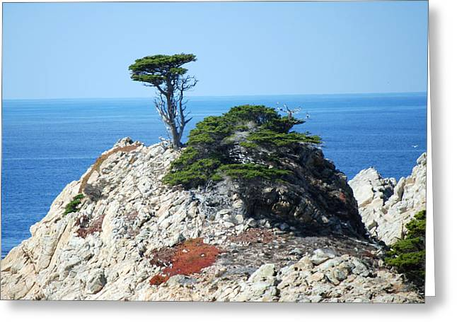 Point Lobos Greeting Cards - Cypress Cove Greeting Card by Harvey Barrison