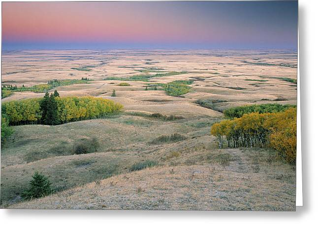 Cypress Hills Greeting Cards - Cypress Hills Interprovincial Park Greeting Card by Darwin Wiggett