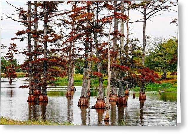 Kayecee Spain Greeting Cards - Cypress In Autumn Greeting Card by KayeCee Spain
