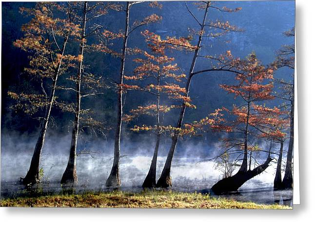 Cindy Rubin Greeting Cards - Cypress in the mist Greeting Card by Cindy Rubin