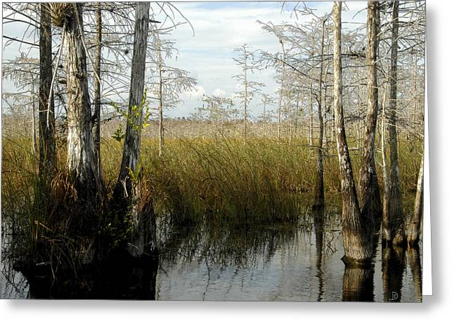 Saw Greeting Cards - Cypress landscape Greeting Card by David Lee Thompson