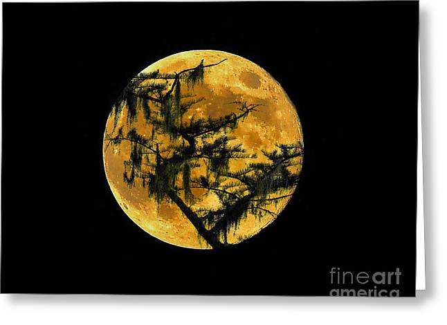 Hallows Eve Greeting Cards - Cypress Moon Greeting Card by Al Powell Photography USA
