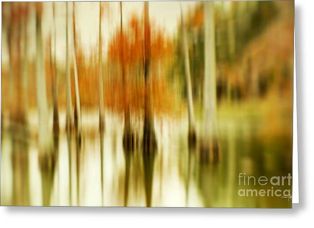 Cypress Morning Greeting Card by Scott Pellegrin