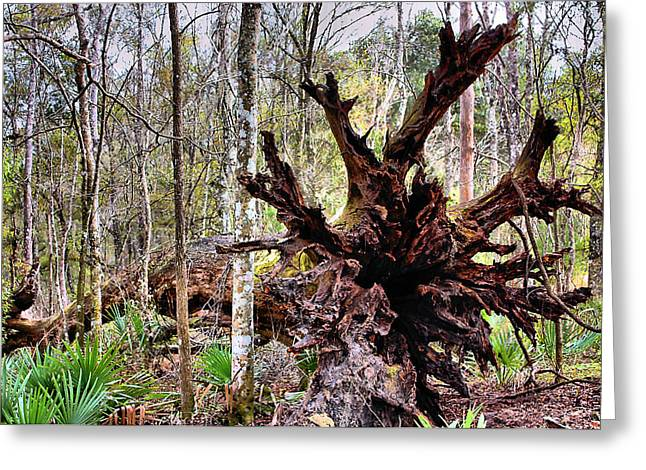 Cypress Roots Greeting Card by Kristin Elmquist