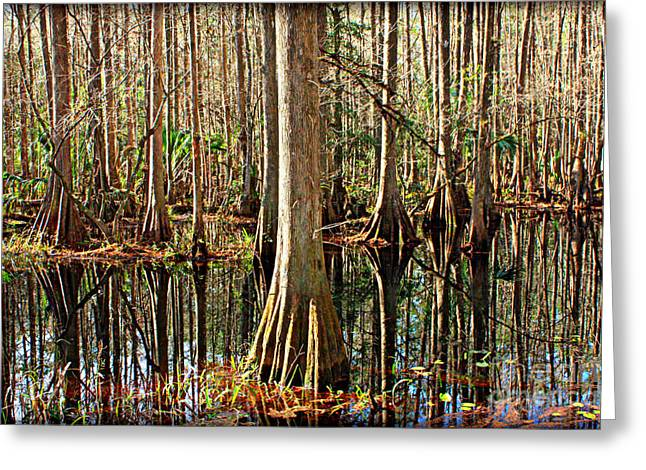 Florida Swamp Reflection Greeting Cards - Cypress Swamp Greeting Card by Carol Groenen