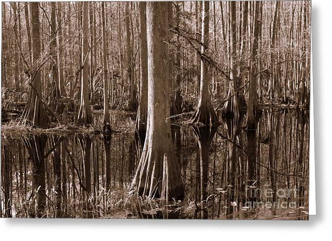 Reflection Of Trees Greeting Cards - Cypress Swamp Reflection in Sepia Greeting Card by Carol Groenen