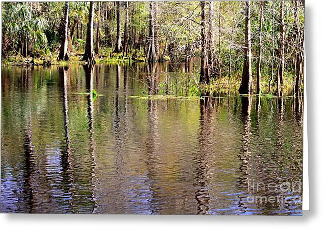 Reflections Of Trees In River Photographs Greeting Cards - Cypress Trees along the Hillsborough River Greeting Card by Carol Groenen