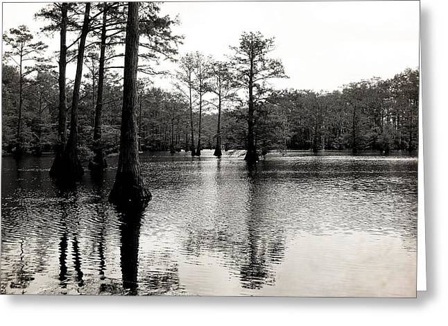 Cypress Trees in Louisiana Greeting Card by Ester  Rogers