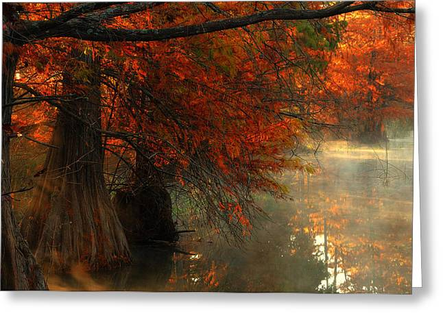 Misty Greeting Cards - Cypress Trees in Red Greeting Card by Iris Greenwell