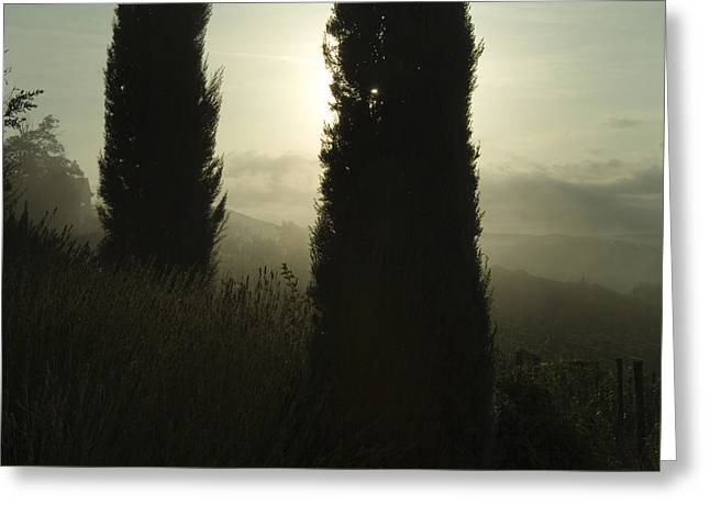Chianti Hills Greeting Cards - Cypress Trees Looming In Front Greeting Card by Todd Gipstein