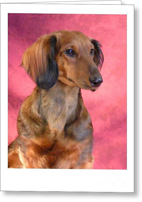 Dachshund 472 Greeting Card by Larry Matthews