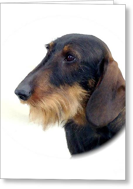 Dachshund 847 Greeting Card by Larry Matthews