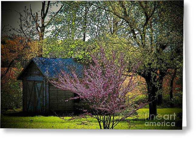 Red Bud Trees Greeting Cards - Daddys Old Shed in the Spring Greeting Card by Joyce Kimble Smith