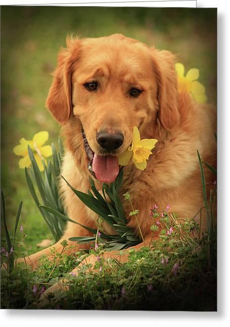 Kim Henderson Greeting Cards - Daffodil dreams Greeting Card by Kim Henderson