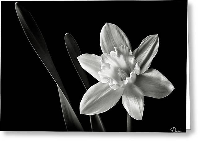 Flower Photos Greeting Cards - Daffodil in Black and White Greeting Card by Endre Balogh