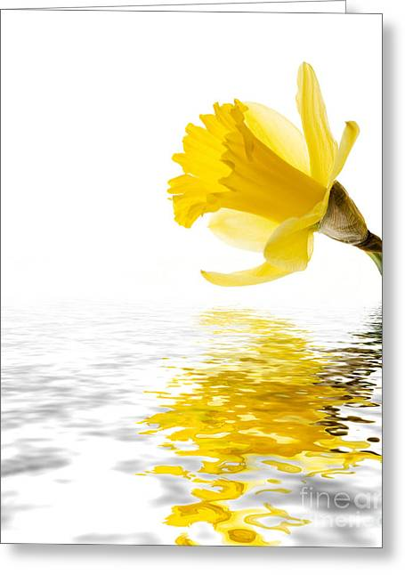 Botanic Greeting Cards - Daffodil reflected Greeting Card by Jane Rix