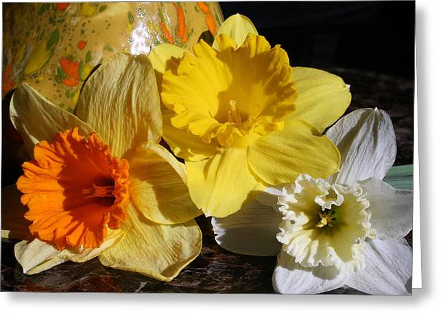 Hardy Amaryllis Greeting Cards - Daffodil Threesome Greeting Card by Kay Novy