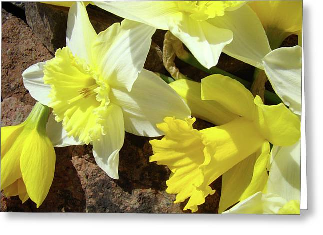 Daffodils Photographs Greeting Cards - DAFFODILS FLOWER BOUQUET Rustic Rock Art Daffodil Flowers Artwork Spring Floral Art Greeting Card by Baslee Troutman Art Prints Giclee