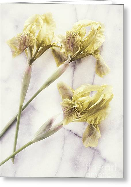 Marble Stone Greeting Cards - Daffodils Greeting Card by HD Connelly