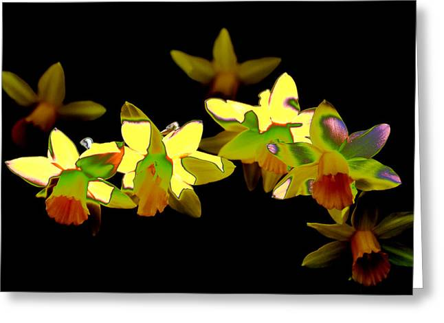 Daffodils Photographs Greeting Cards - Daffodils Greeting Card by Michael Mogensen