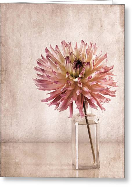 Dahlias Greeting Cards - Dahlia Greeting Card by Carol Leigh