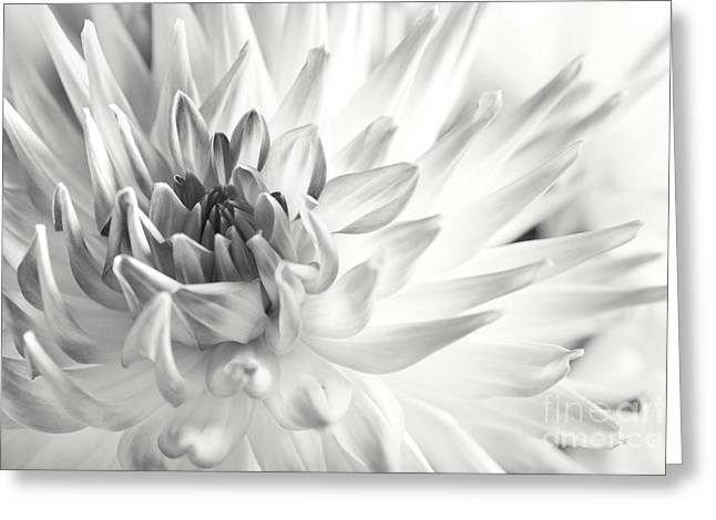 Dahlia Greeting Cards - Dahlia Flower 02 Greeting Card by Nailia Schwarz