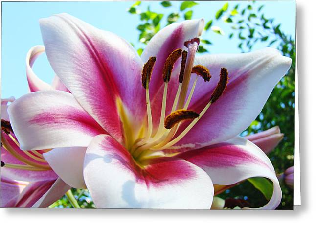 Lilies Framed Prints Greeting Cards - Dahlia Flower art print Summer Dahlieas Floral Greeting Card by Baslee Troutman