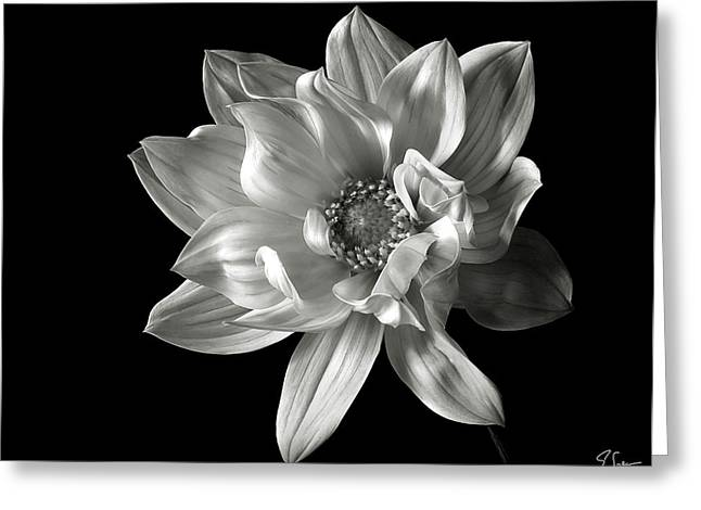 Flower Photos Greeting Cards - Dahlia in Black and White Greeting Card by Endre Balogh