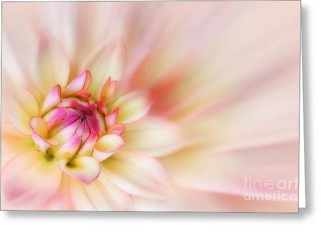 Botany Digital Art Greeting Cards - Dahlia Greeting Card by John Edwards