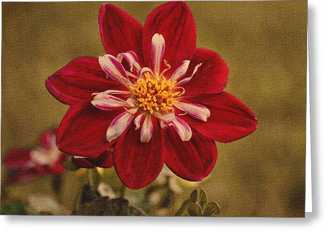 Dahlia Greeting Card by Sandy Keeton