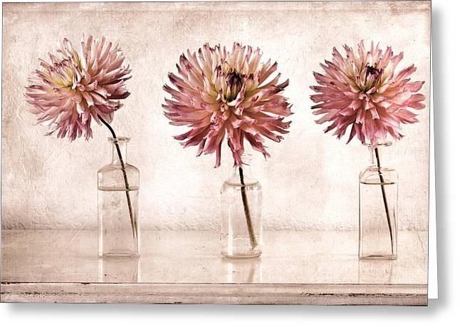 Dahlias Greeting Cards - Dahlias Greeting Card by Carol Leigh